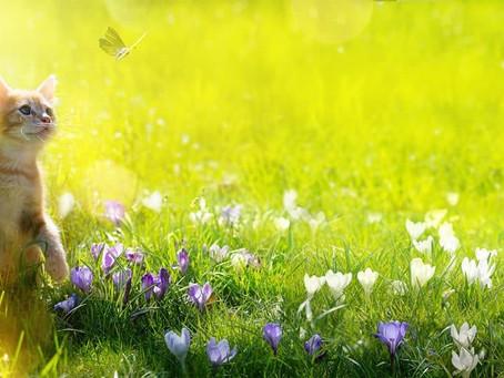 spring magic!