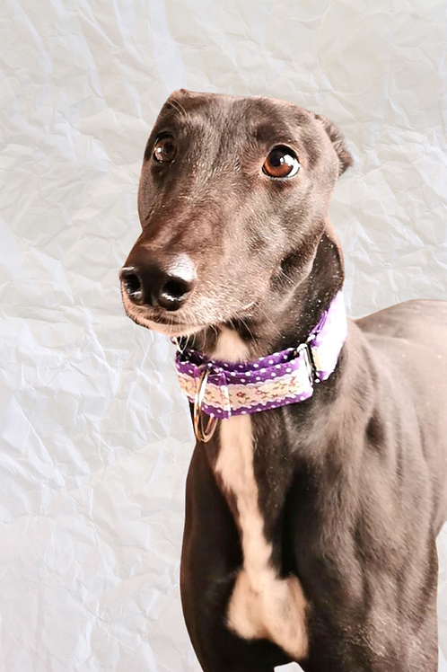 Purple Ditsy Floral & Polka Martingale Collar
