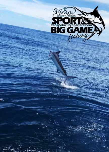 Big Game Fishing for Marlin with XSCAPE.