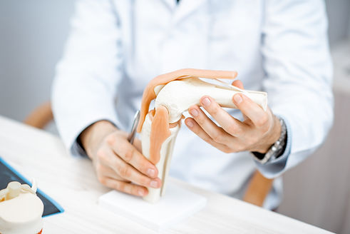 膝関節の模型