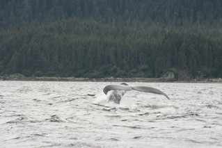 Juneau whale watching with BestDamnCharters