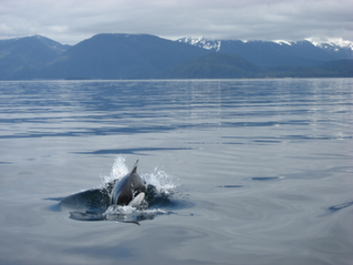 Juneau Whale Watching, Juneau Fishing Charters