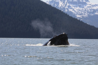 Juneau Whale Watching