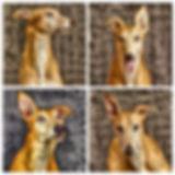 collage_grace.jpg
