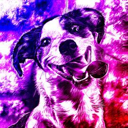 dog_grey_wildlight