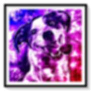 dog_grey_wildlightF.jpg
