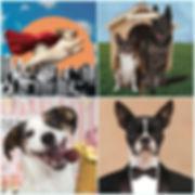 collage_dogfun.jpg