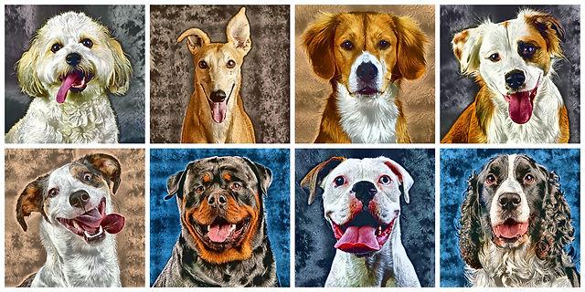 collage_dogsSM.jpg
