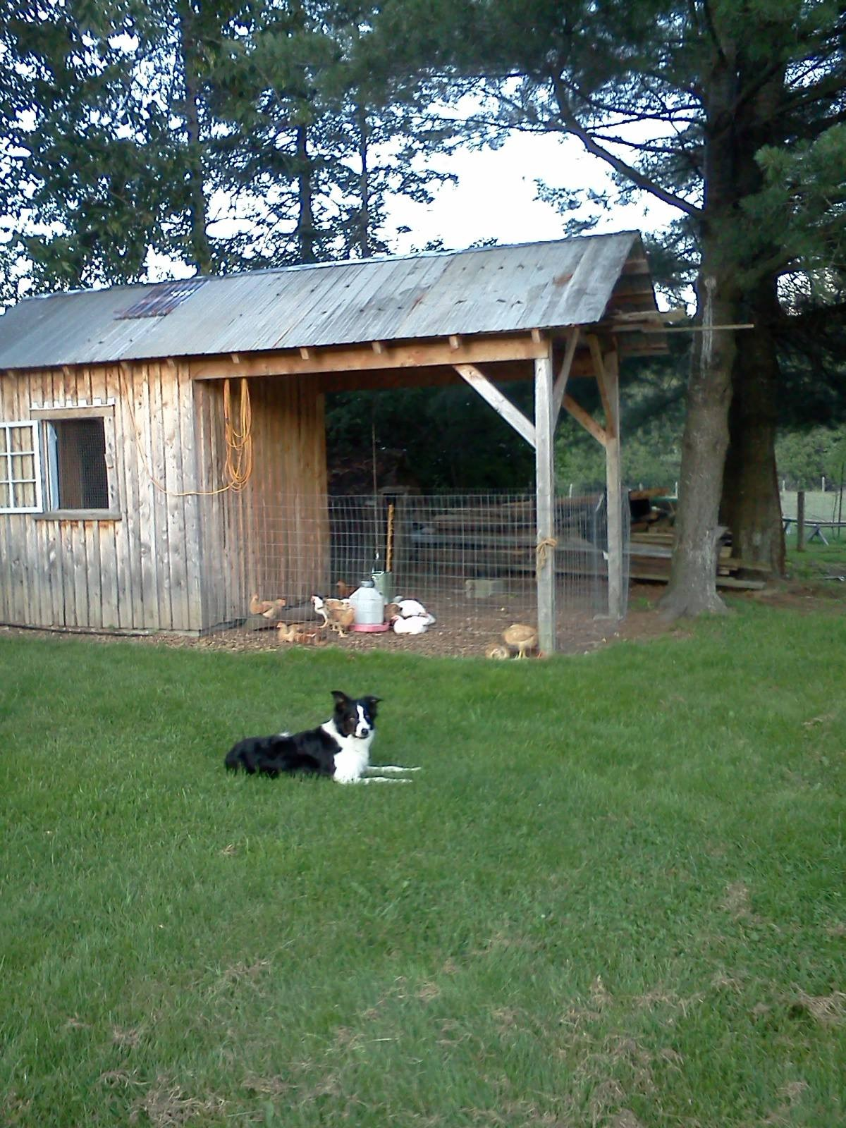 Fen on chicken duty
