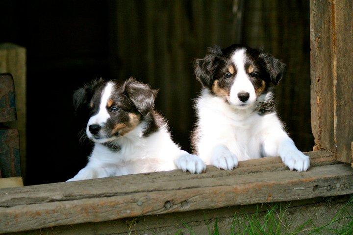 Puppies exploring (Photo by Grace Bassette)