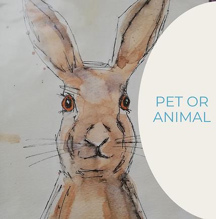 Pet or Animal.png