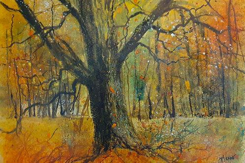 One oak Autumn