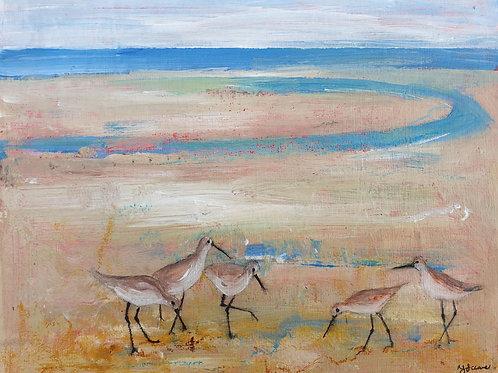 Shoreline Waders