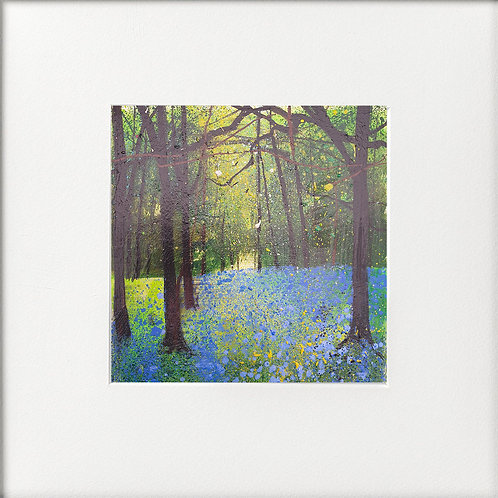 Seasons - Spring Bluebell Clearing