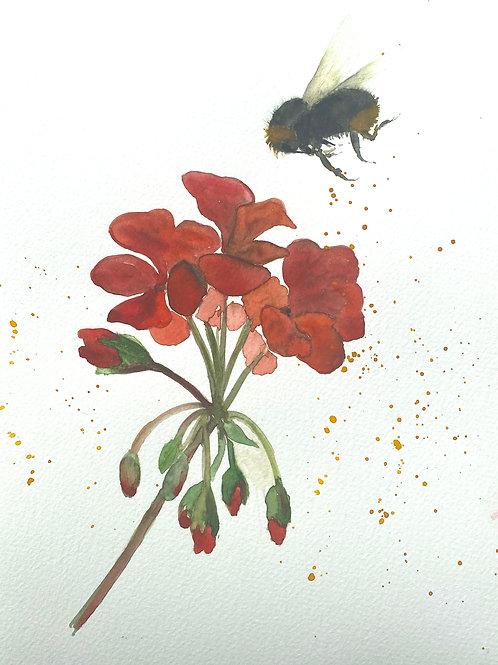 Bumble Bee Red Geranium Flower
