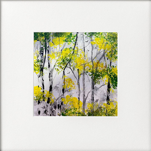 Seasons - Spring Silver Birches