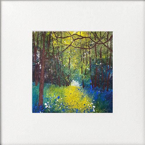 Seasons - Spring Bluebells Abundant