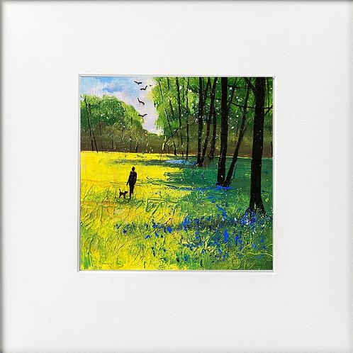 Seasons - Last Bluebells First Foxgloves Stroll