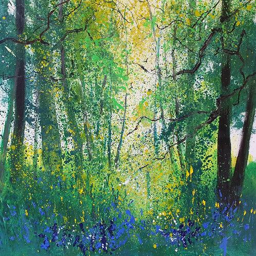 Bluebells Fringe of Woods