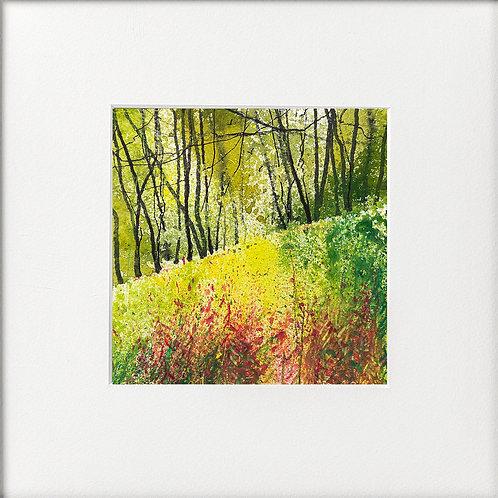 Rosebay Willowherb Edge of Woods