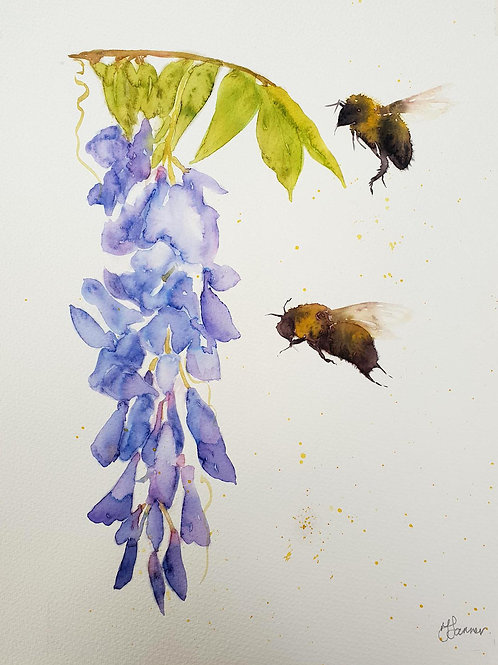 Bumble Bees & Wisteria