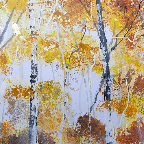 Autumn Silver Birch Trunks