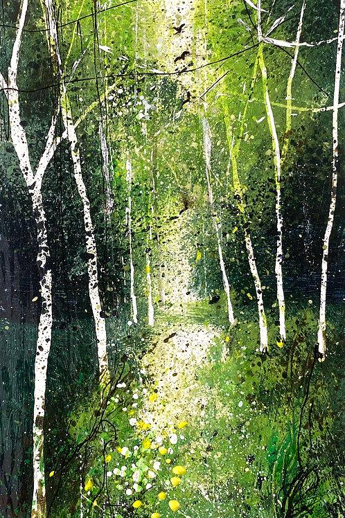 Height of Summer Silver Birch Woodland