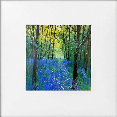 Seasons - Spring Shimmering Bluebells