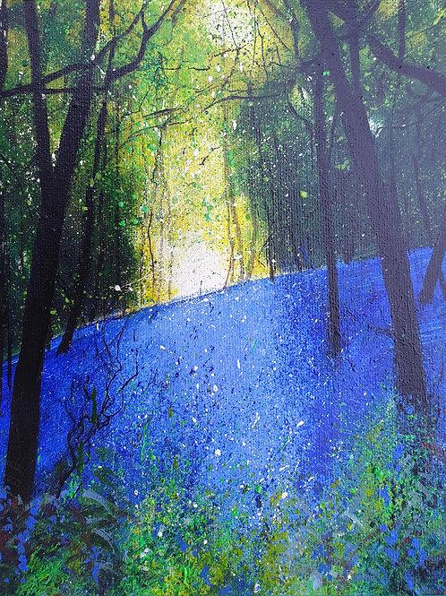Bluebell Bank Woodland