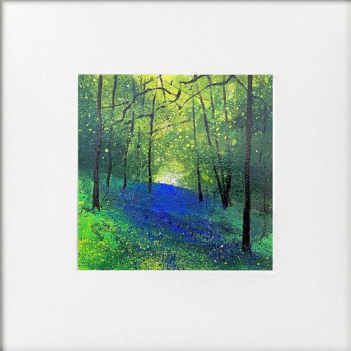 Spring- Bank of Bluebells