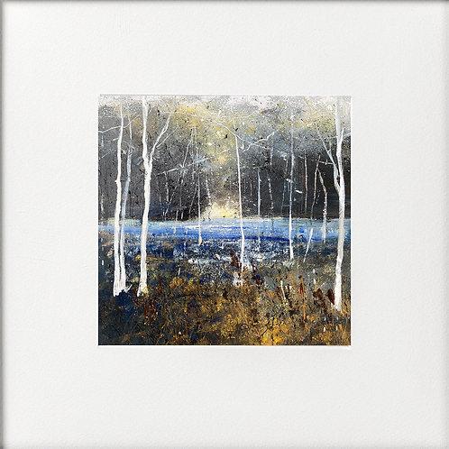Winter - Silver Birches Beside Lake