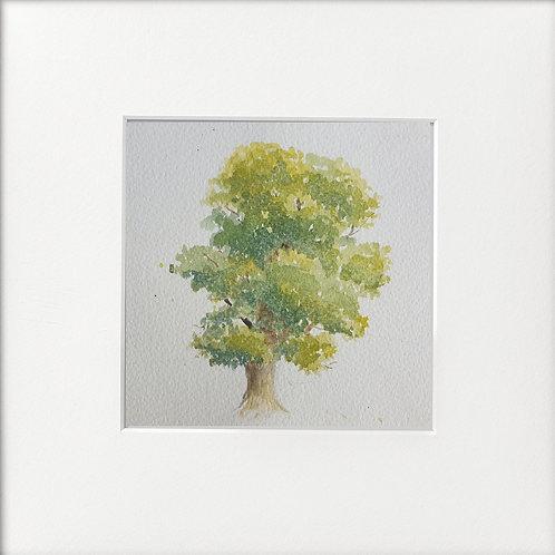 One Oak Tree
