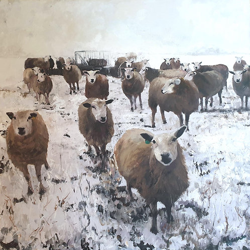 Winter Sheep Feeding