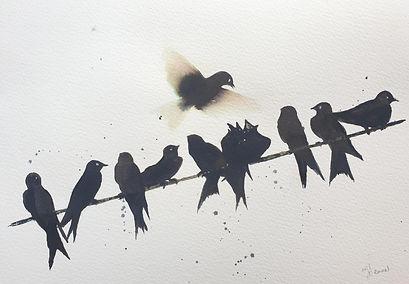 Swallows.jpeg