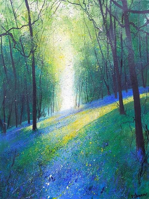 Light across Bluebell Woodland