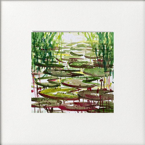 Waterlily Pond Damsel Flies