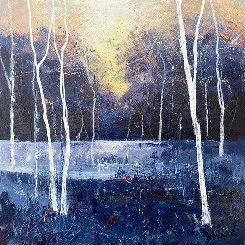 Seasons - Winter Birches Weak Sun