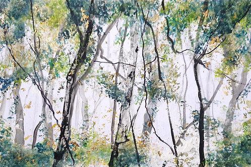 Spring Silver Birches