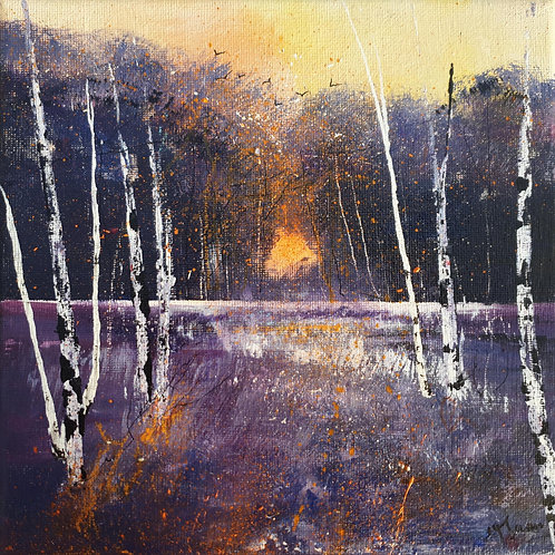 Seasons - Winter Warm Sun through Silver Birches