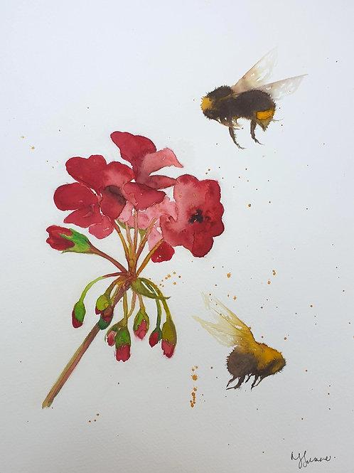Bumble Bees & Red Geranium flower