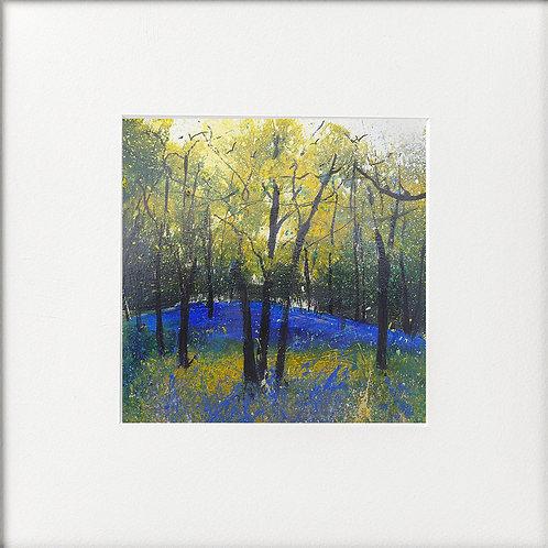 Seasons - Spring scent of bluebells