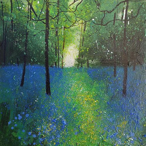 Seasons - Spring Bluebell Time