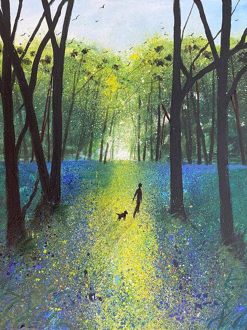 Stroll through Bluebells