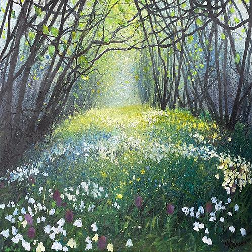 Seasons - Spring Woodland Wildflowers
