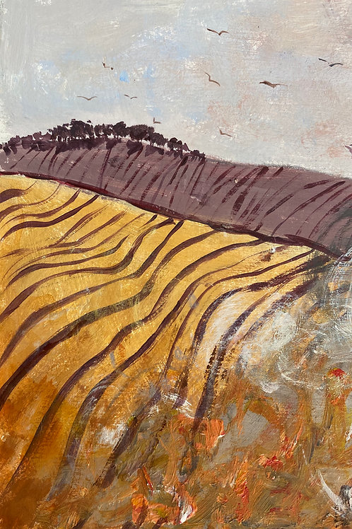 Ploughed Fields Windy Hill