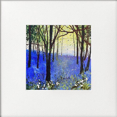 Seasons -Spring, light through bluebells