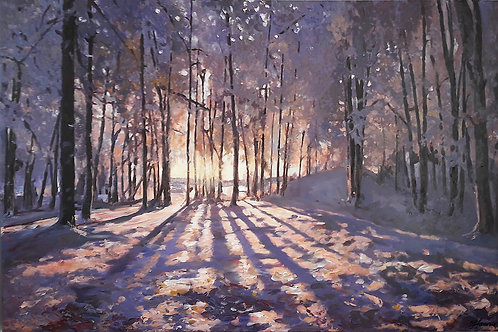 Winter Light Through Trees