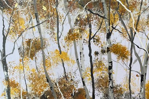 Dappled Light Silver Birch Trunks 2