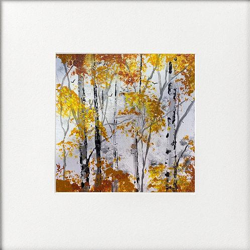 Seasons - Early Autumn Silver Birches