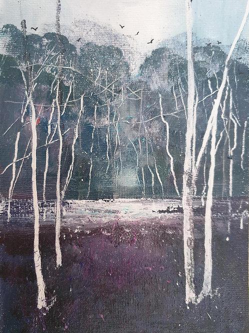 Winter Silver Birches 4